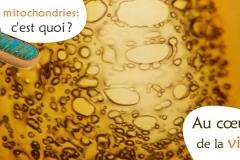 Quel est le rôle de la mitochondrie?