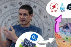 Boostez votre bioénergétique | Mitochondries  | Production de chaleur