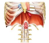 diaphragme-respiration-kundalini-yoga-bretagne
